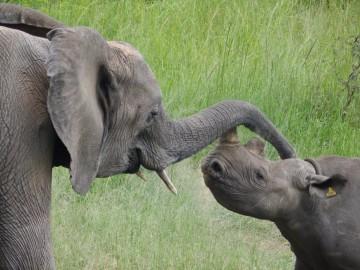 Imire Elephant Rhino