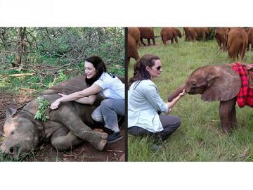 Kristin Davis Rhino Elephant