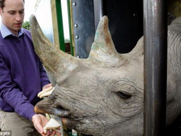 Prince William feeding Rhino