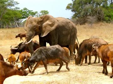 Elephantetc