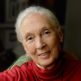 Dr. Jane Goodall turns 80 years young! - The Perfect World Foundation