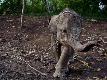 elephat 2