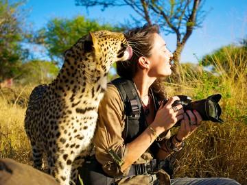 Shannon Wild Leopard Lick