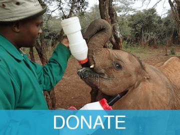 donate_donate_en