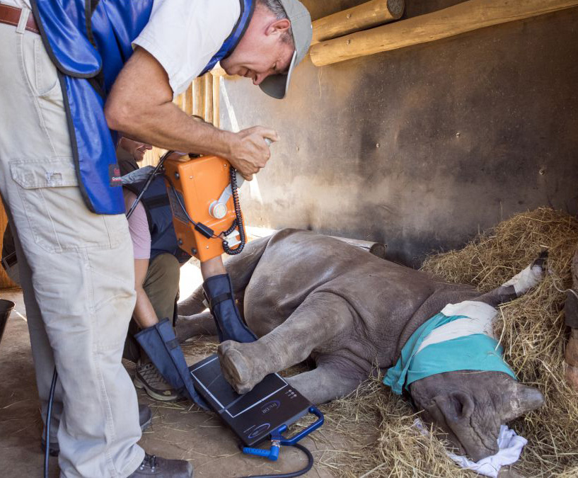 Baby Rhino rescue