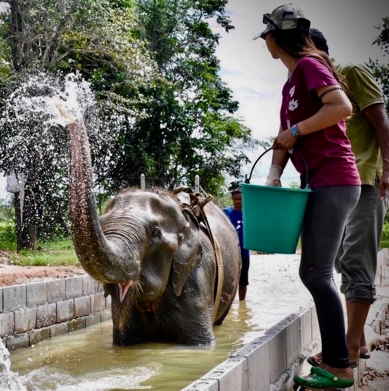Elephant/volunteering