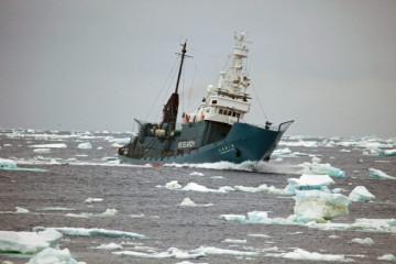 antarctica-whaling