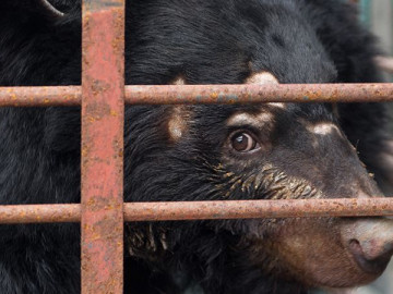 What-is-bear-bile-farming-banner-banner.cfc43686593cd03628122be418cfae13