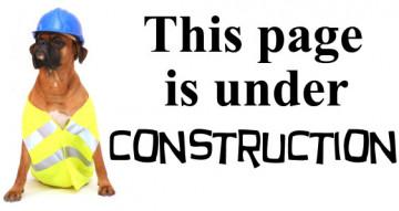 Under-Construction-Dog